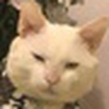 猫咪记者李察德