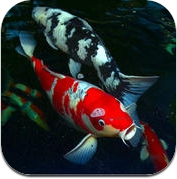 Koi Fish Guide (iPhone / iPad)