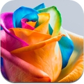 Amazing Flower Wallpapers & Backgrounds - Roses, Orchids, Lily & more Flowers Pictures (iPhone / iPad)